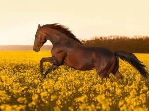 Horse photo warren