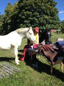 Bars & Horses - Shadow & Annette